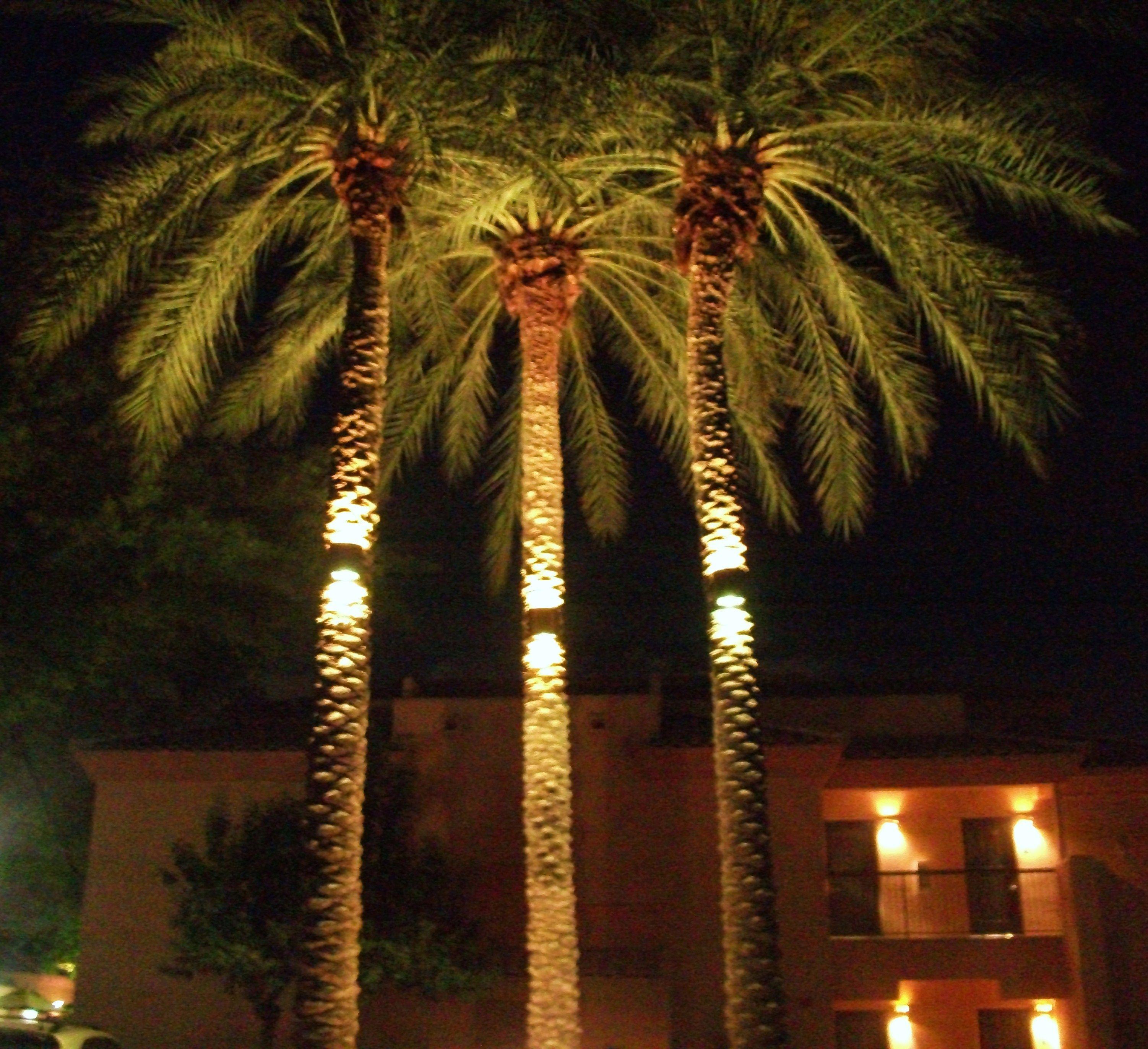 Palm Tree Light International