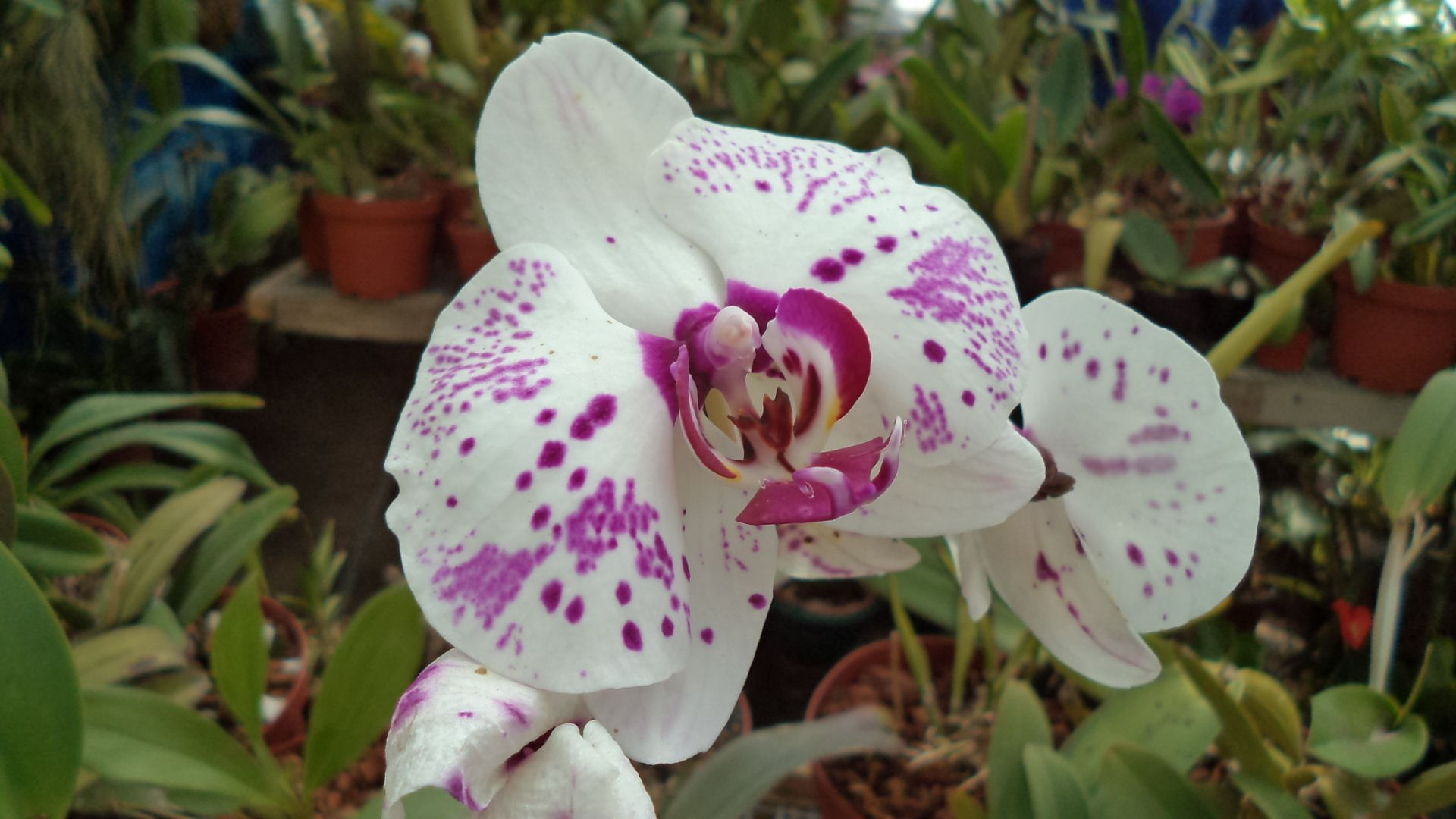 Las mejores plantas ornamentales best ornamental plants for 20 plantas ornamentales