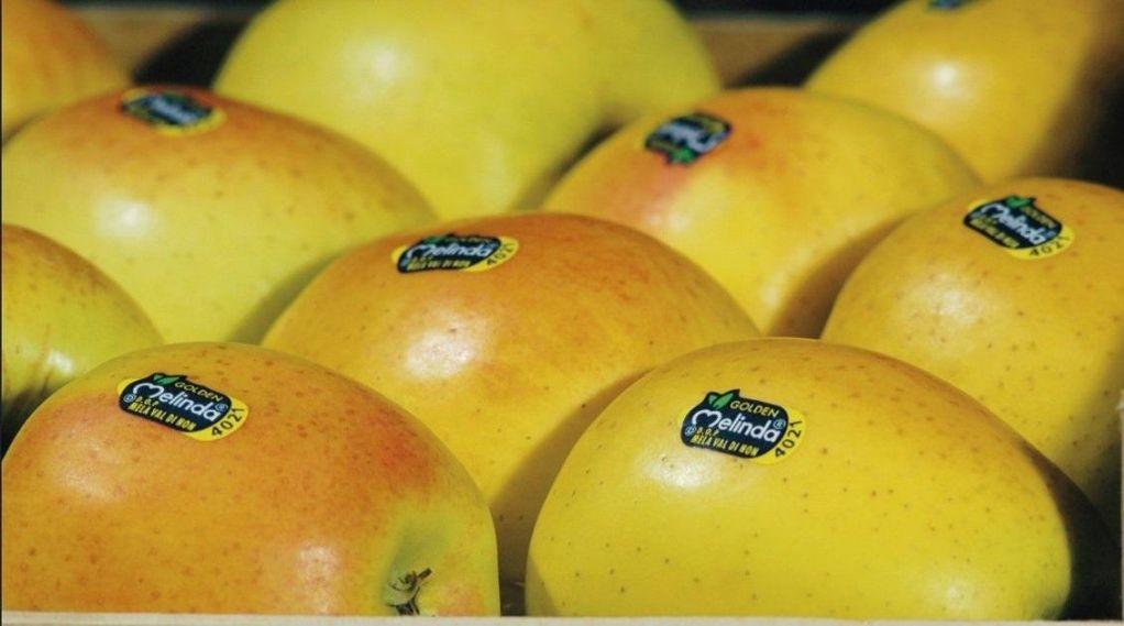 Asia Fruit Logistica Fair