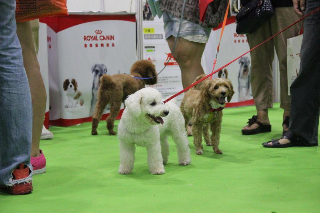 Exhibit At China Internationa Pet Industry Fair
